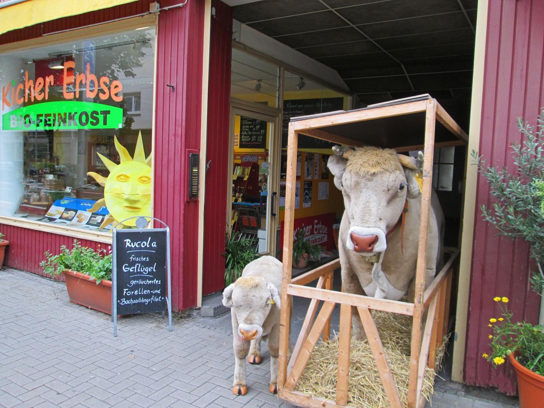 Kuh und Kalb am Eingang zur Kichererbse